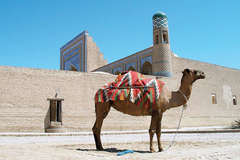 image Ouzbekistan Khiva camel  it