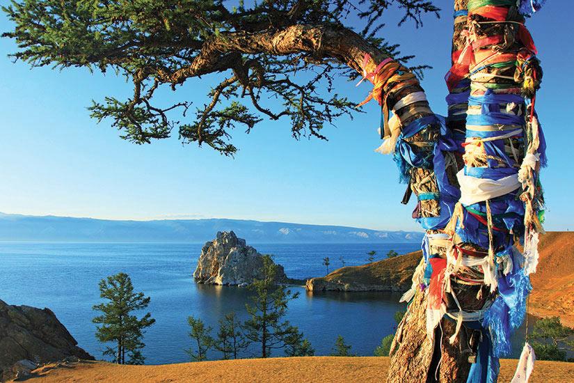 image Russie Lac Baikal Guerisseur tree  it