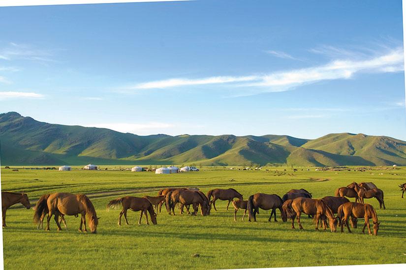 image mongolie chevaux  it
