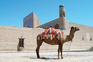(vignette) Vignette Ouzbekistan Khiva camel  it